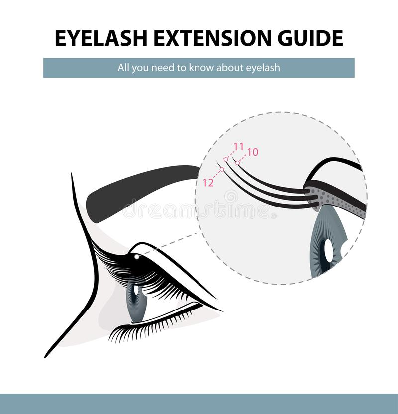 Eyelash extension guide. Eyelashes grow. Eyelid. Side view. Infographic vector illustration stock illustration