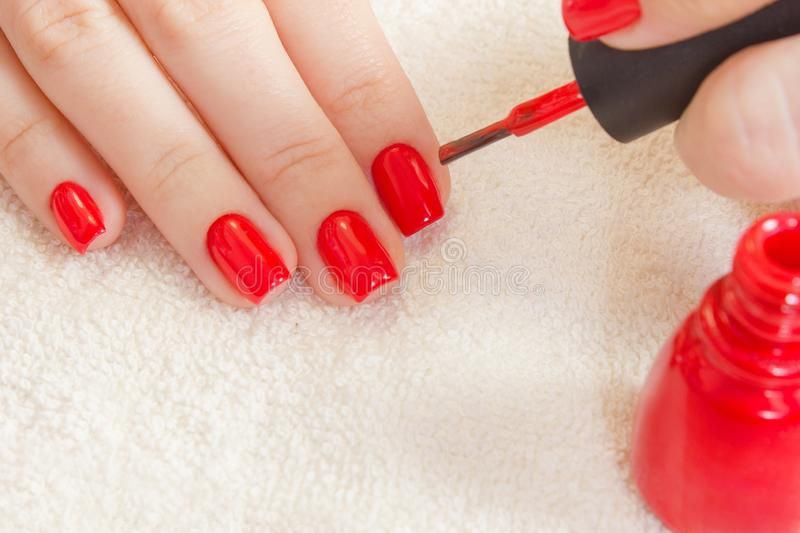 Girl paints her nails red nail polish. Beauty salon. manicured hand on white towel and red bottle gel laquer royalty free stock photo