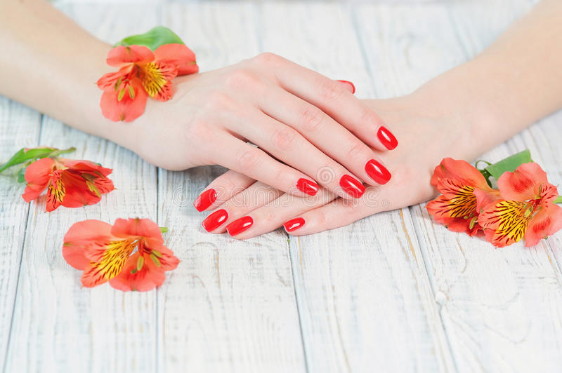 Woman hands with beautiful red manicure on fingernails royalty free stock images